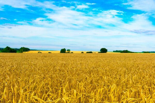 ЮК Армада - Земельна реформа 2020: яким буде ринок землі та що отримають українці?