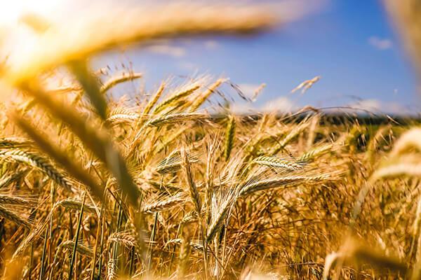 ЮК АРМАДА - Постійне користування земельною ділянкою: новий погляд на правове регулювання